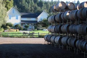 wine barrels and winery
