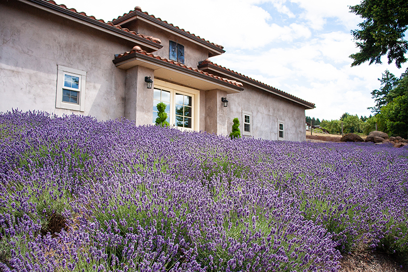 winery exterior with lavender field