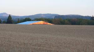 barn in morning light