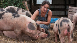 Farmer and pigs