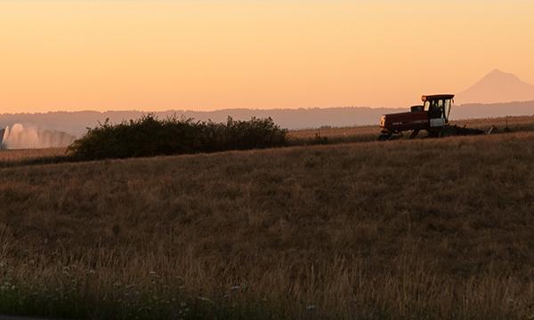 tractor in morning light
