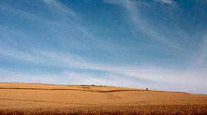 wheat field and big sky